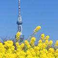 Photos: 春色タワー