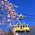 お花見ロープウェイ