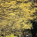 黄色い散歩道