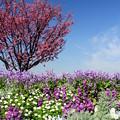 Photos: 花咲く丘