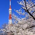 Tokyo Blossom