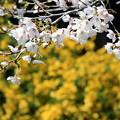 平成最後の春