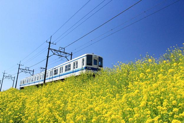 快走!菜の花電車