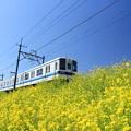 Photos: 快走!菜の花電車