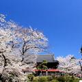 Photos: 上野の杜