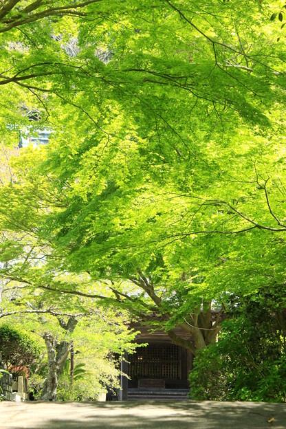 Photos: 緑隧道