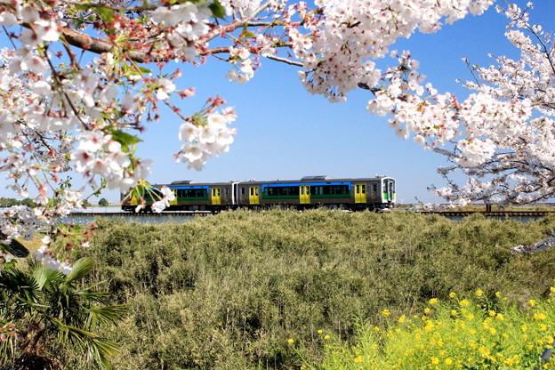 Photos: 春のローカル