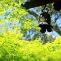 Photos: 初夏の陽射し