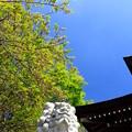 Photos: 新緑の古社