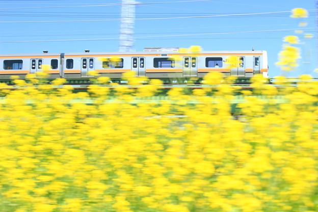 Photos: Musashino Spring