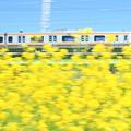 Musashino Spring