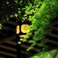 Photos: 新緑の茶房