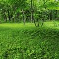 Photos: 森の中