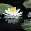 Photos: 水上花