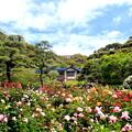 Photos: 貴婦人の庭