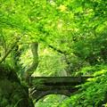 ハマの石橋