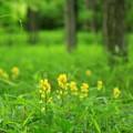 Photos: 森に咲く