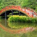 Photos: 初夏の池