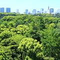 Photos: 東京の杜