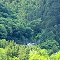 Photos: 山の中