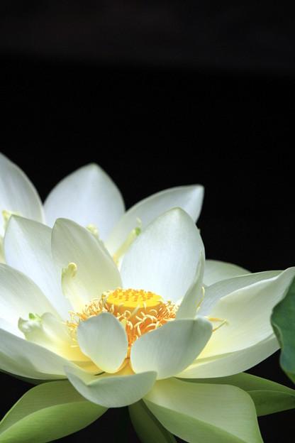 極楽浄土の花