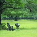 Photos: チャリ In Green