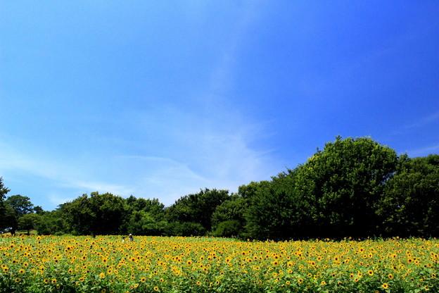 Hot Summer Yellow