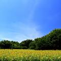 Photos: Hot Summer Yellow