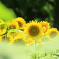Photos: On A Hot Summer Day
