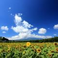 夏の富士隠れ