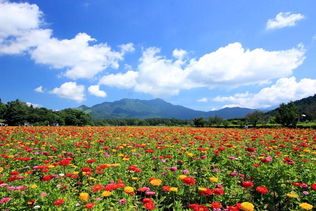Photos: 涼風渡る高原