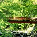 Photos: かえで橋