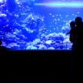 Photos: Little Submarine