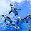 Photos: 空飛ぶペンギン