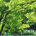 Photos: 秋の新緑