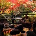 Photos: 朱に染まる庭園
