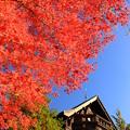 Photos: 青空に朱