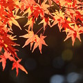 Photos: 秋錦