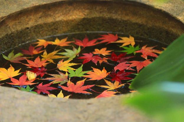秋色ポット