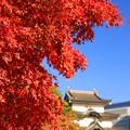 Photos: 令和の秋