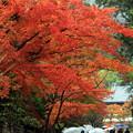 Photos: 秋雨紅葉