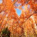 レンガ色の森