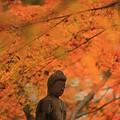 Photos: 晩秋に佇む