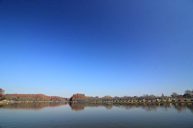 Photos: 水元ブルー