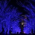Photos: Blue Night