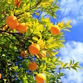 Photos: Summer Orange