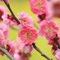 Photos: 新春色