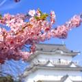 Photos: 古城の春
