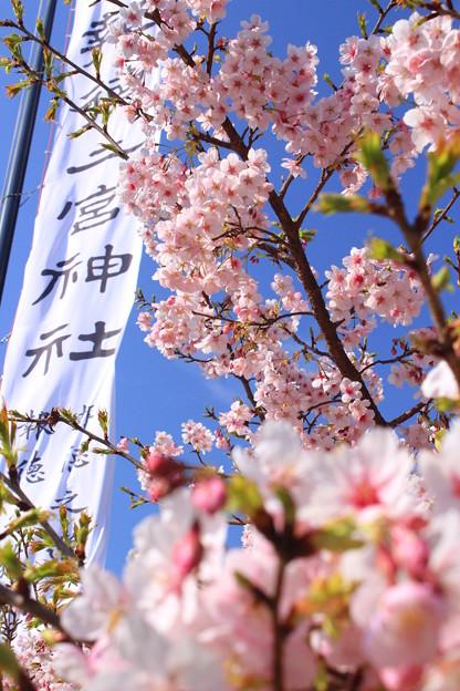 金次郎の春