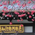 Photos: 早春の桜